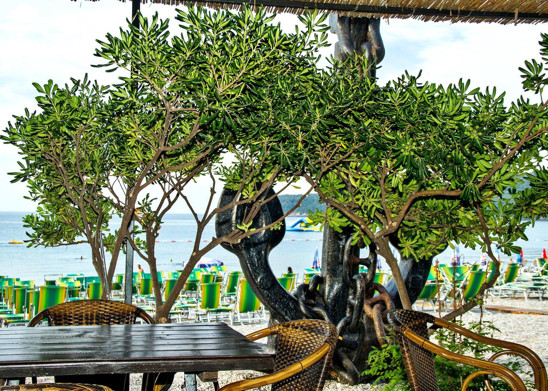 Palma Jaz  - бар